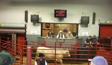 Upstate Livestock Anderson, SC cattle auction
